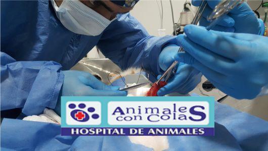 https://hospitalanimalesconcolas.com/images/departmrent/cirug1.jpg