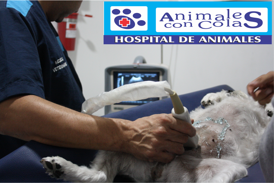 https://hospitalanimalesconcolas.com/images/departmrent/1.png