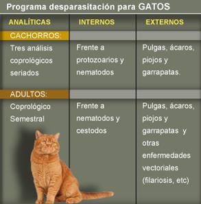https://hospitalanimalesconcolas.com/images/desparasitacionGato.png