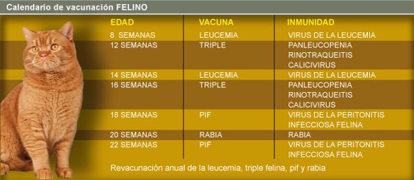 https://hospitalanimalesconcolas.com/images/VacunacionGato.png