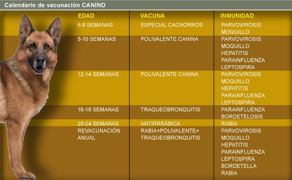 https://hospitalanimalesconcolas.com/images/vaunacionPerro.png